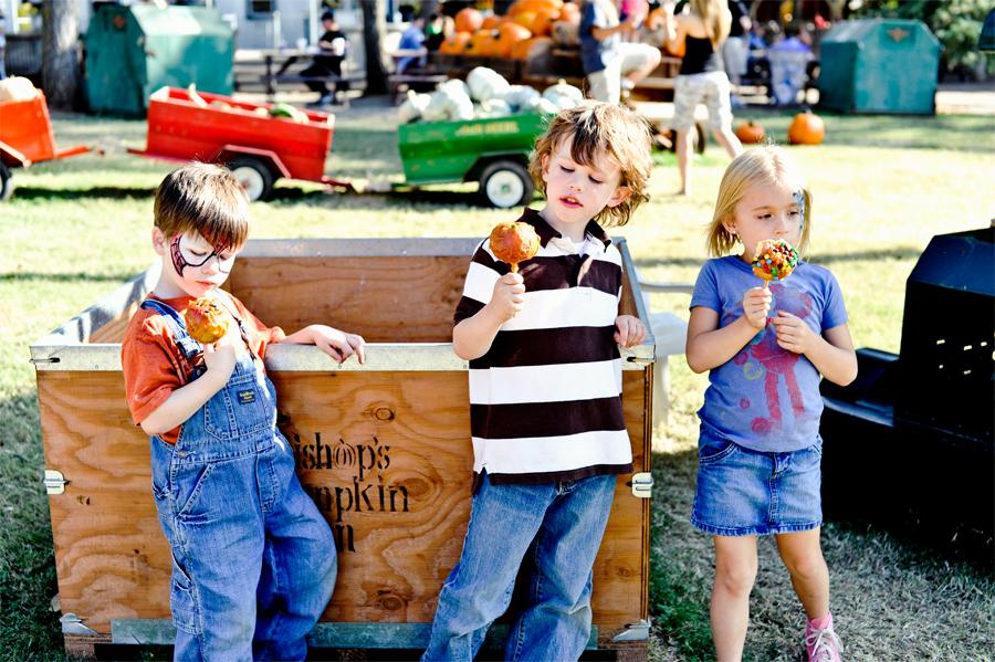 pumpkin-1261